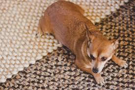 carpet odor control services