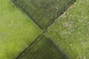 Algae removal Bristol